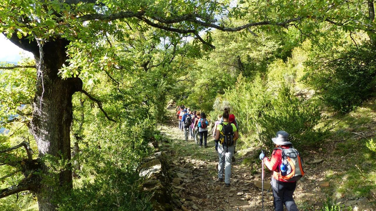 """Rancho San Martín ofrece recorridos denominados """"baños forestales"""", una práctica de relajación de origen japonés."""